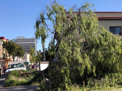 Nine injured in Downtown Martinez when winds knock down tree