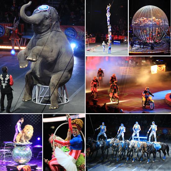 Circus DRAGONS 2013_collage