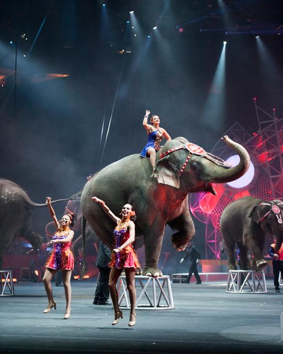 circus_elephant_550
