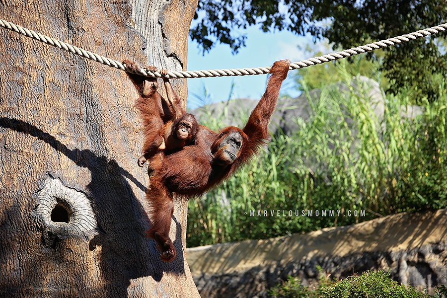 Zoo Atlanta-519-Edit_BLOG