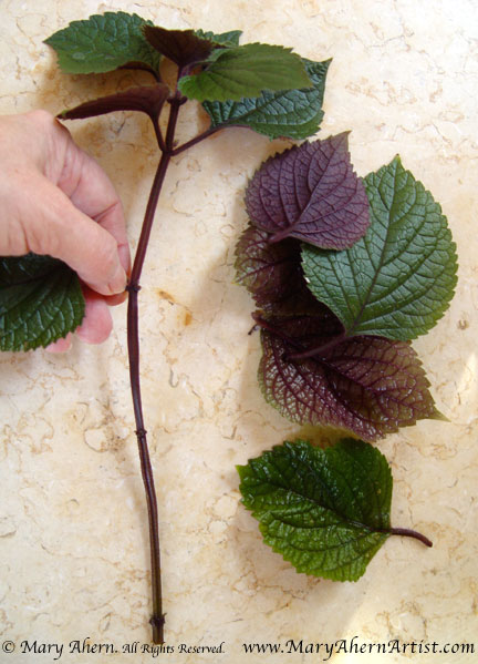 I use my fingers rather than scissors to snip off the leaves because the give me more control