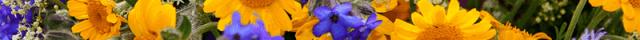 Linalool terpene ganja