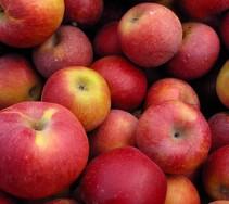 good apples make good hard cider