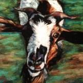 Haitian Goat, 8x10 pastel commission