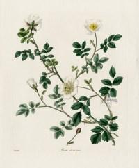 botanical art   Nature as Art and Inspiration