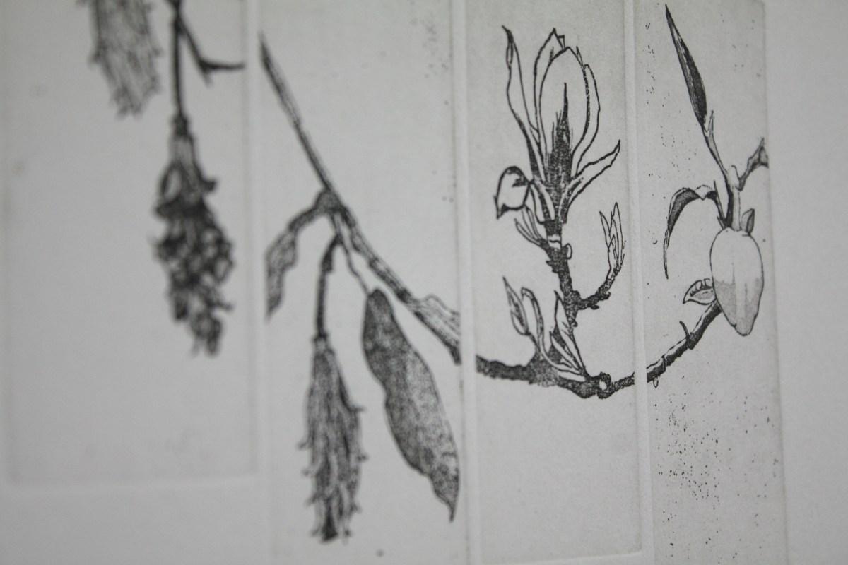 Magnolia Studies