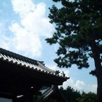 072 林光院 山門と松