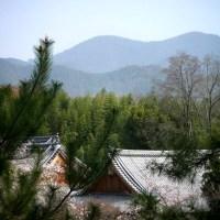 148 天龍寺 望京の丘と桜