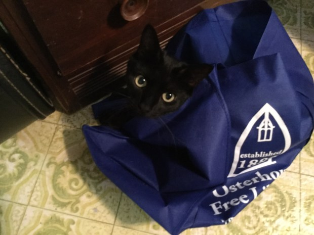 Oliver in a Library Book Sack