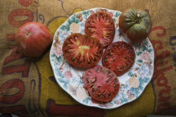 Black Krim is a very tasty addition to the fall garden.  This photo is the copyrighted property of William D Adams and cannot be published without written permission from William D Adams.