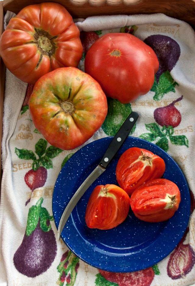 2012 tomato season wrap up by bill adams. Black Bedroom Furniture Sets. Home Design Ideas