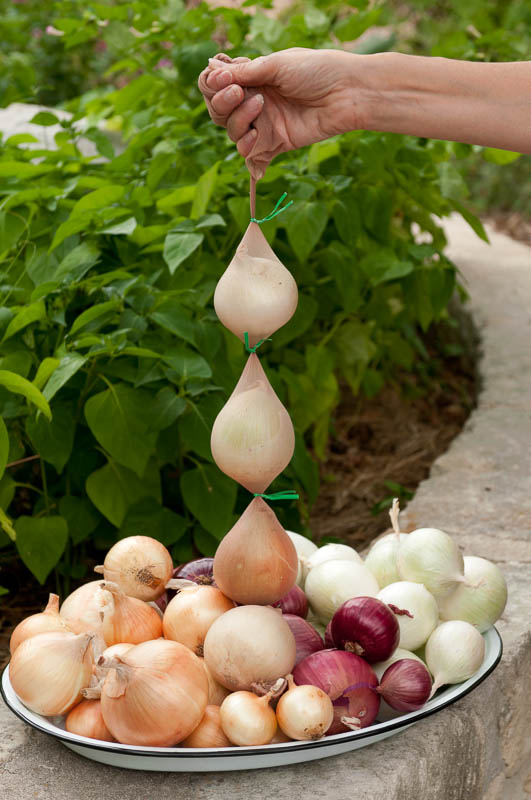 Don't through out those old panty house.  the make great storage for your onions!  Photo by Bruce Leander