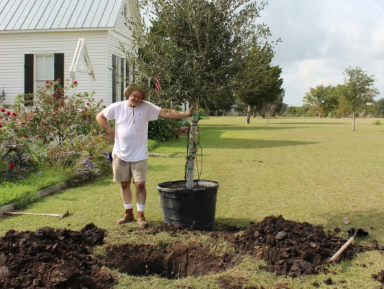 A big tree requires a big hole and some help.  I had two grown men help me with my 45 gallon Empire Live Oak.
