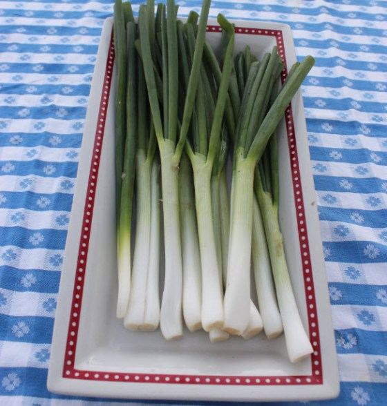 "L.E. Andrews' ""gumbo onions"" are the best green onions I have ever grown."