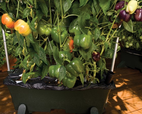 EarthBox produces large yields of high quality vegetables with much less work