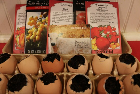 """This year I am growing tomato transplants in egg shells. The tomatoes I am trying this year are """"Old German"""", """"Black Vernissage"""", """"Black"""", """"Barry's Crazy Cherry"""" and a pass-a-long tomato we call """"Brenda's Delight""""."""