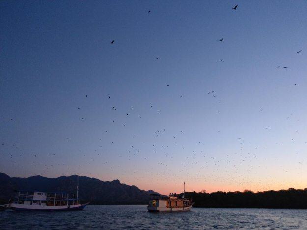 科莫多世界自然遺產-KALONG ISLAND蝙蝠