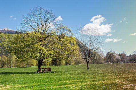 MatericLook: Italian Bucolic 00 by Francesco Perratone, Italy Photography and art