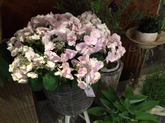 東急セルリアンタワーホテルのお花ショップ