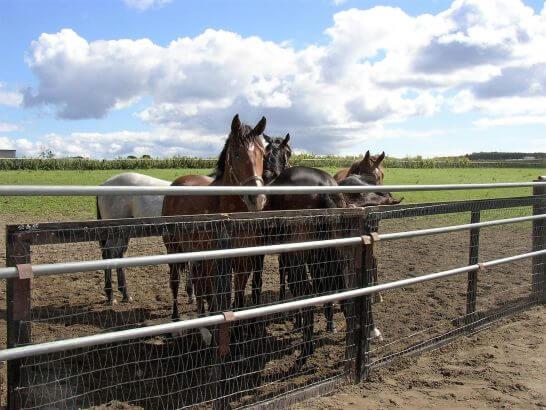 牧場と馬たち