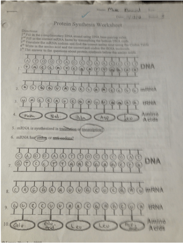 Printables Protein Synthesis Worksheet printables protein synthesis worksheet safarmediapps worksheets pictures answers kaessey for school kaessey