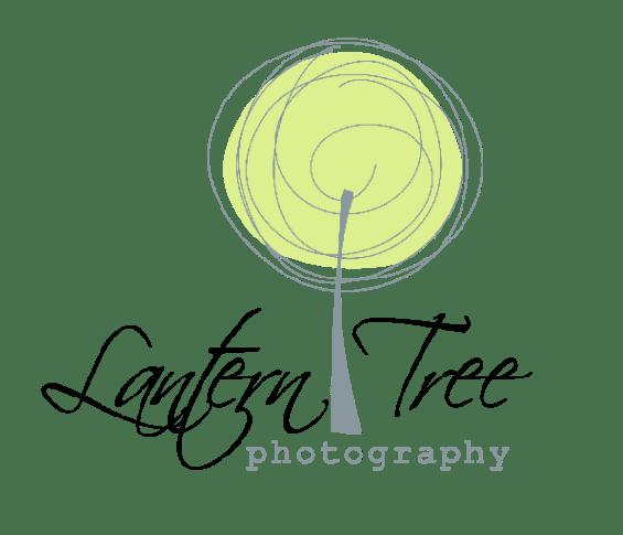 Lantern Tree Photography