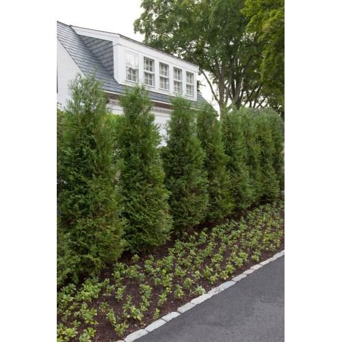 Medium Crop Of Evergreen Landscape And Design
