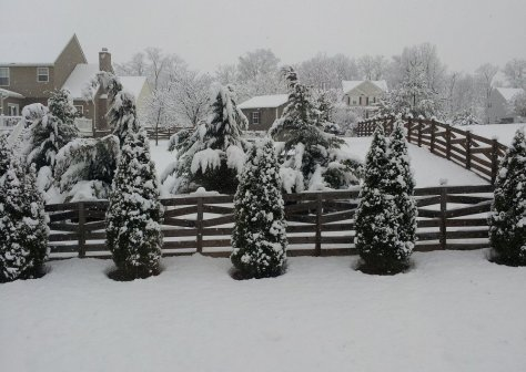 Snowday-march