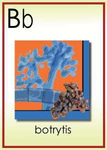B is for Botrytis