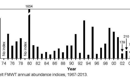 Delta smelt index