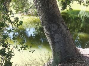 Putah Creek 3