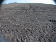 Ros barren field
