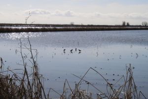 Yolo Bypass Feb 2013 #22