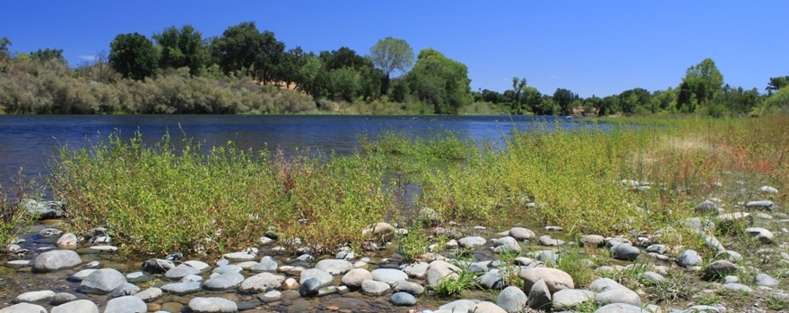 American River at Ancil Hoffman Park sliderbox