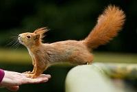 Сколько надо есть белка и какой белок лучше: животный или растительный?
