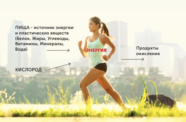 Энергообеспечение организма человека.