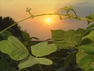 Kudzu Documentary Has Enduring Legacy