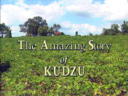 The kudzu documentary