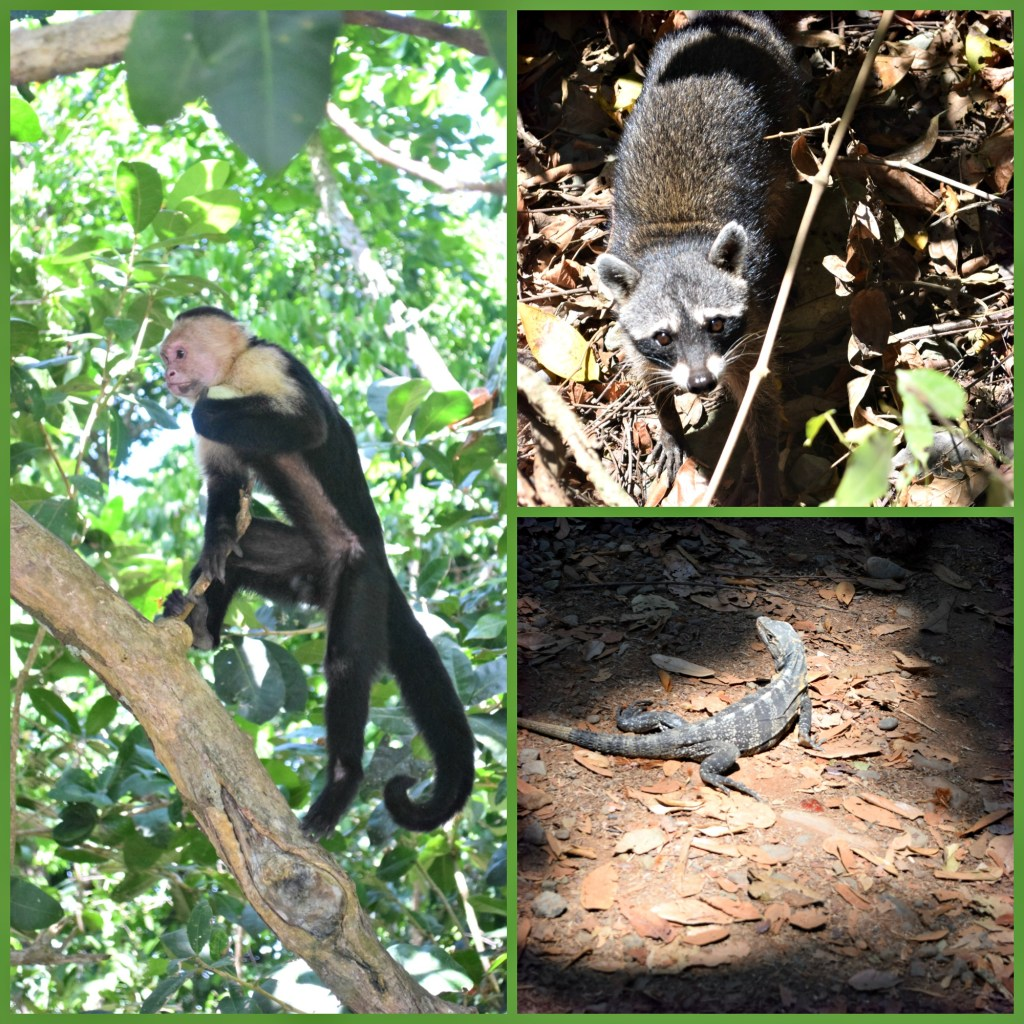 Costa Rica Wildlife animals