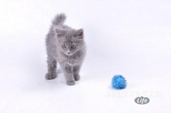 HSSA foster kittens-2