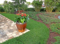 Small Of St Augustine Sod