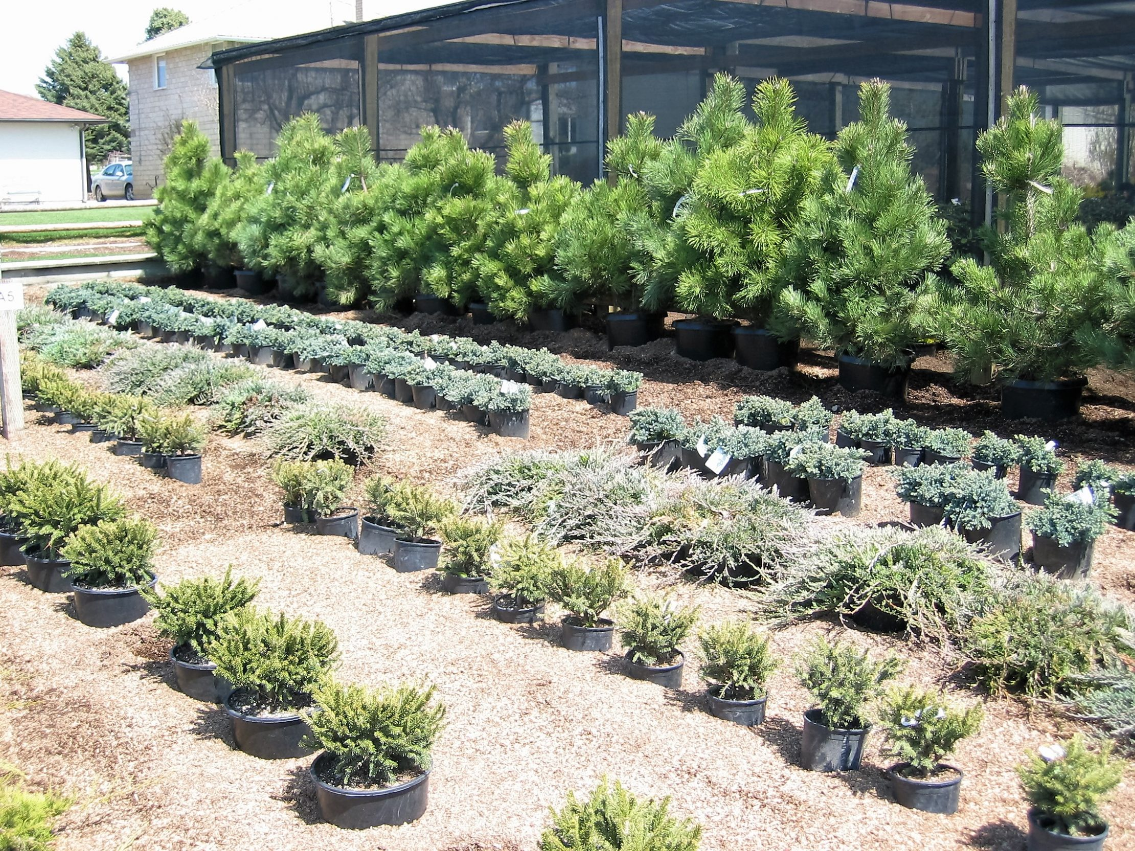 Trees And Shrubs Planting Trees Shrubs Mcpheeters Turf Inc Mcpheeters Turf Inc