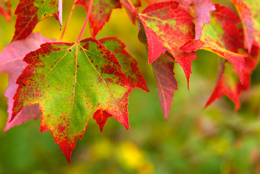 Fall Of The Leafe Wallpaper Fall Foliage And Climate Change Crandall Park Trees