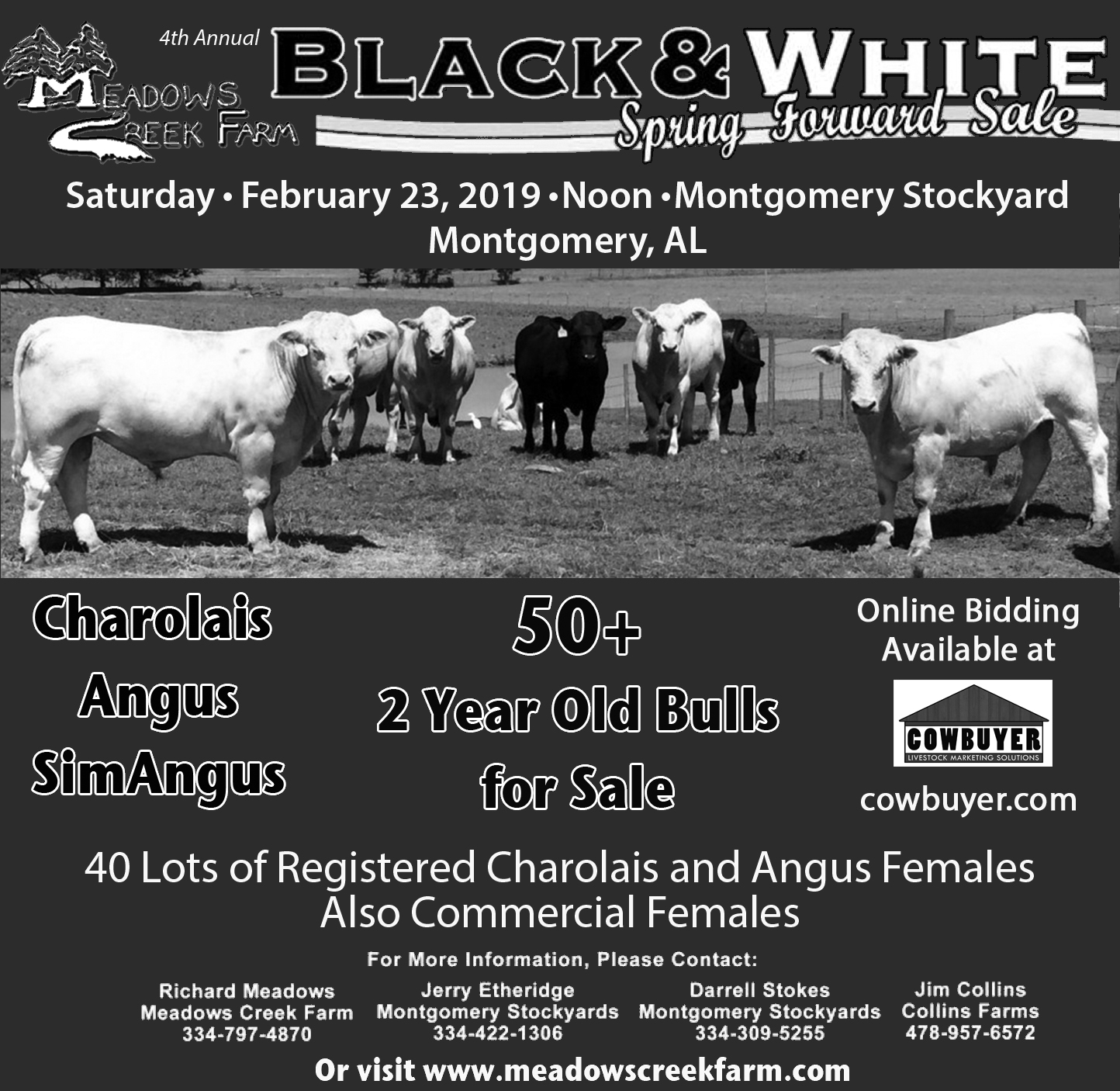 Black Sale Sale Page Meadows Creek Farm Charolais