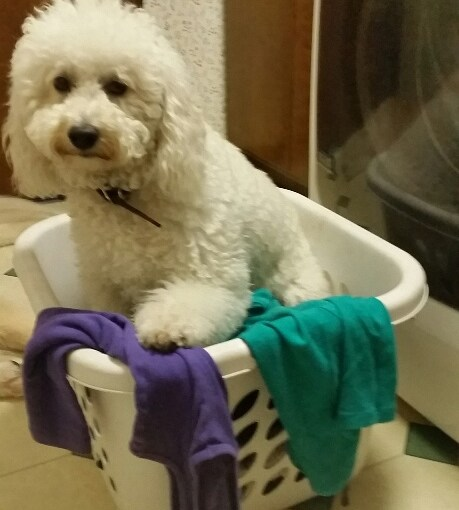 Can Dogs Do Laundry?