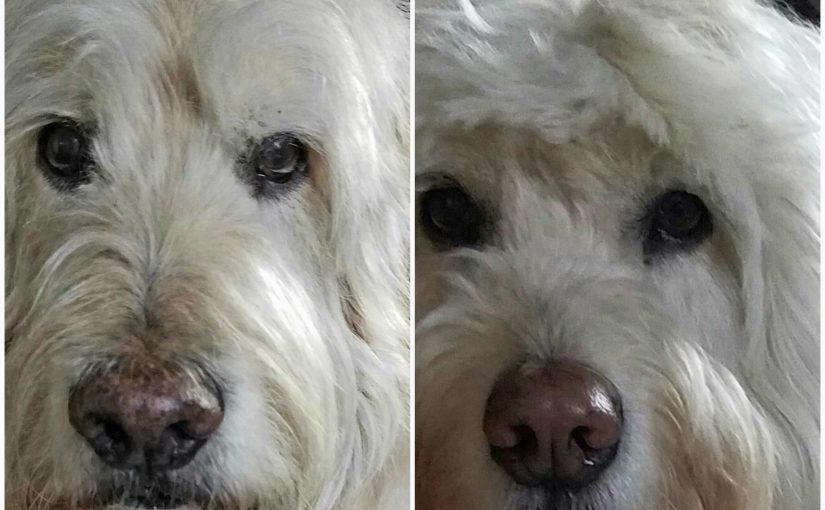 No One Does a Guilt Trip Like a Dog