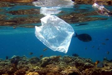arrecifes-contaminacion-corales