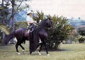 tupac_amaru_caballo_dos