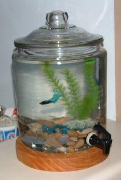 Small fish tank maintenance 2 gallon 2017 fish tank for Self cleaning fish tank walmart