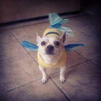 Flounder Dog Costume | Costumers Dream | Pinterest